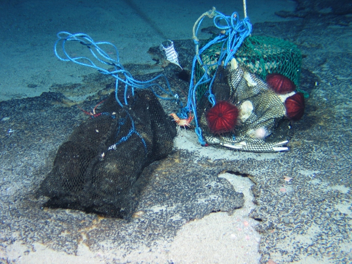 Wood and bone packages on Atlantis Bank. Photo credit: ROV Kiel 6000