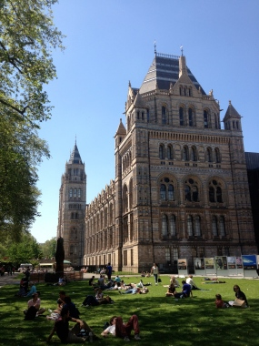The Natural History Museum, London. Photo credit: Diva Amon.