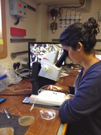 Examining animals found living on the wood. Photo credit: Dr. Adrian Glover.