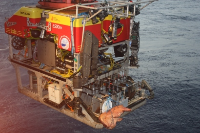 Pig carcass strapped onto ROV Isis. Photo credit: Diva Amon.