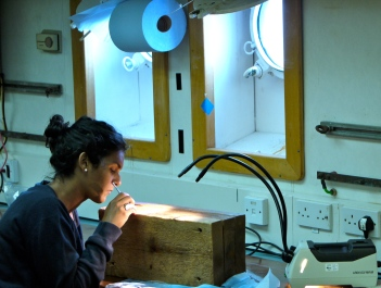 Dissecting the wood for fauna. Photo credit: Dr. Adrian Glover.